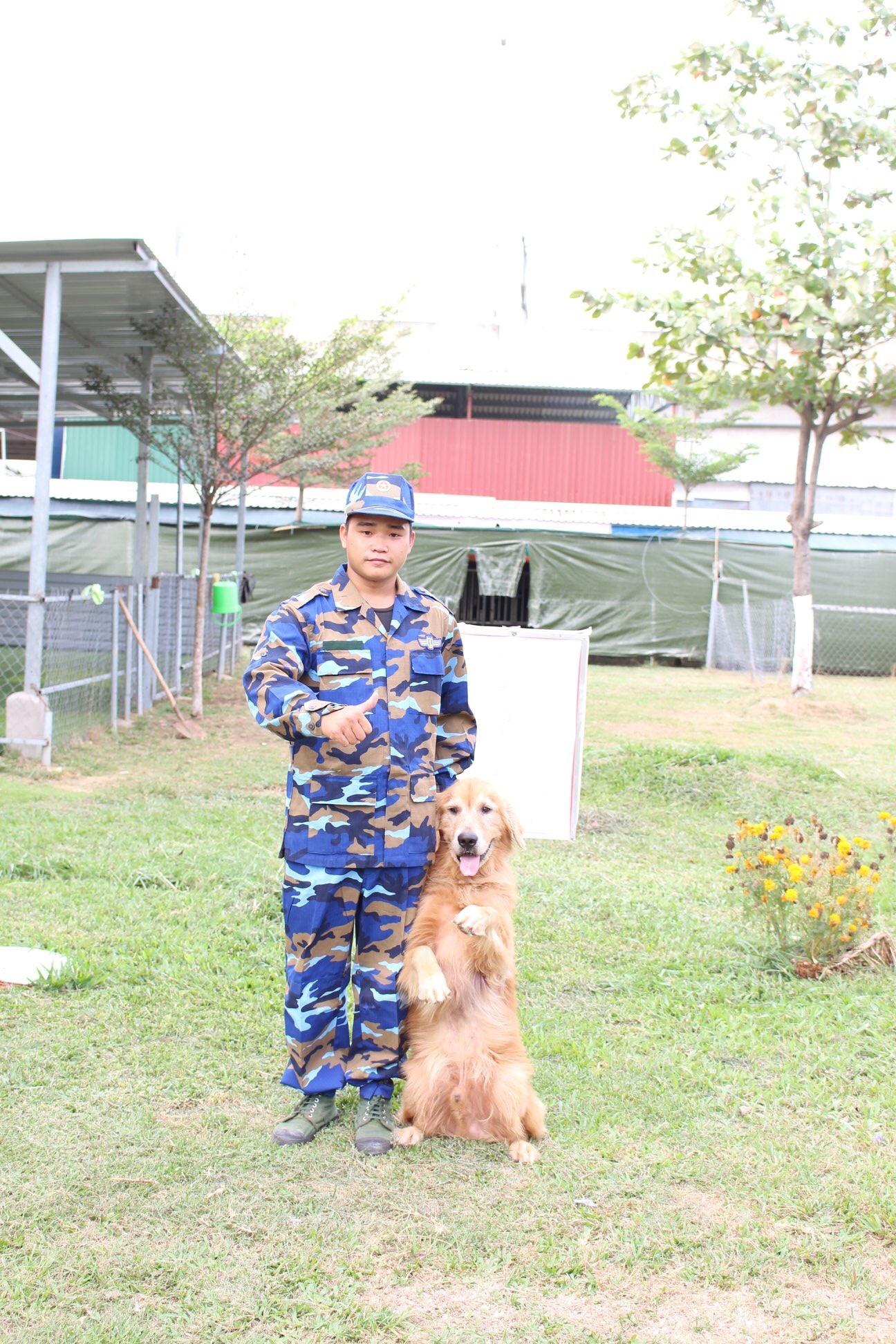 Hình ảnh chú chó đứng, ngồi, nằm khi có hiệu lệnh