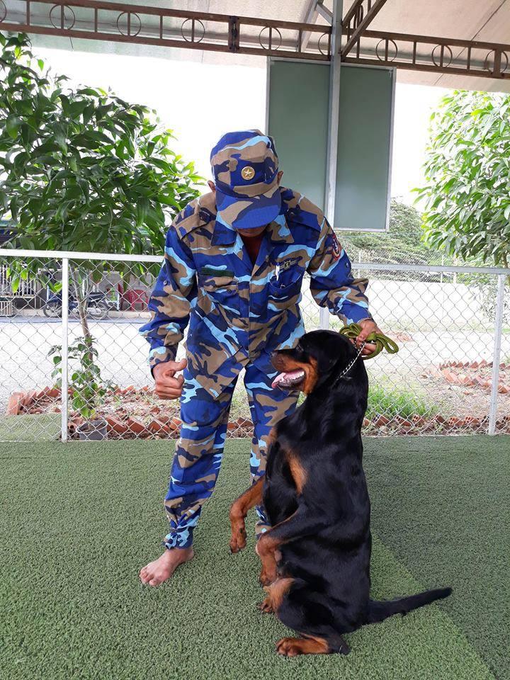 Thực hiện huấn luyện chó chuyên nghiệp tại Toàn Phát