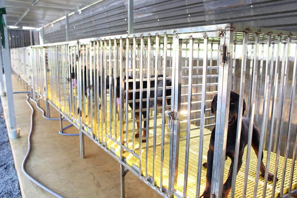 Khu vực chăm sóc chó tại Toàn Phát
