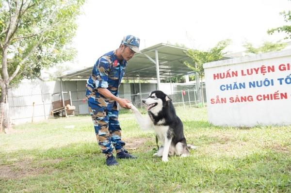 Hình ảnh huấn luyện chó của khách hàng tại Bình Dương