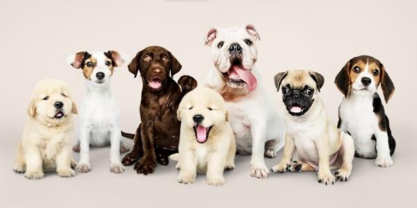 Hình ảnh những chú chó tại trại chó Đồng Nai