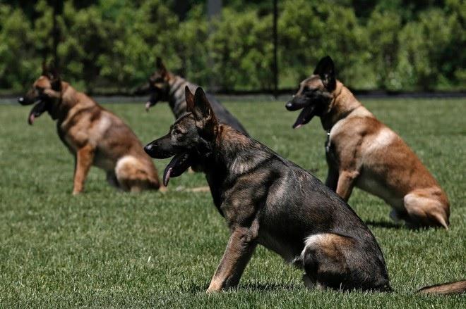 Toàn Phát - Cơ sở huấn luyện chó Tây Ninh uy tín, chất lượng