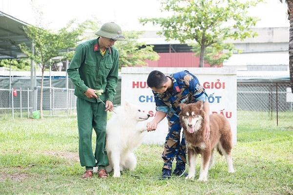 Trại huấn luyện chó tại Bà Rịa Vũng Tàu - Toàn Phát