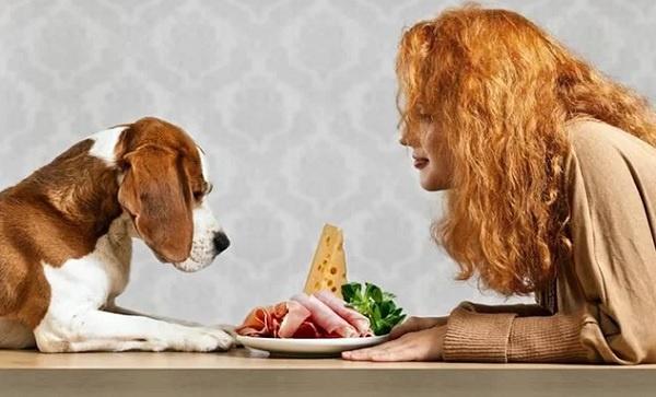 Chế độ ăn cho chó con hàng ngày