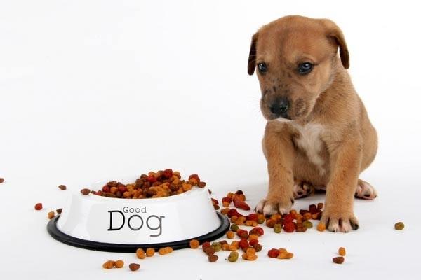 Chế độ ăn cho chó con