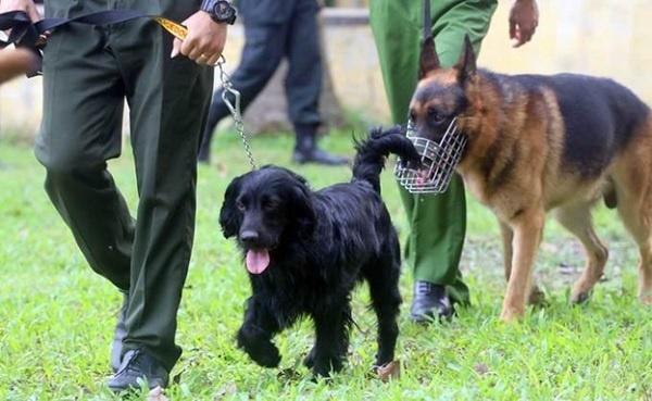 Giáo trình huấn luyện chó nghiệp vụ tại Toàn Phát