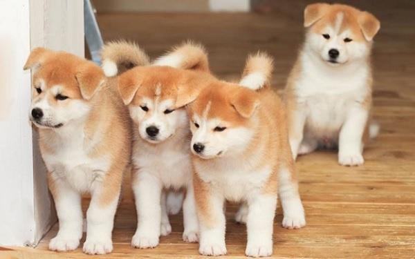 Sở hữu những chú chó giúp giảm căng thẳng và mệt mỏi