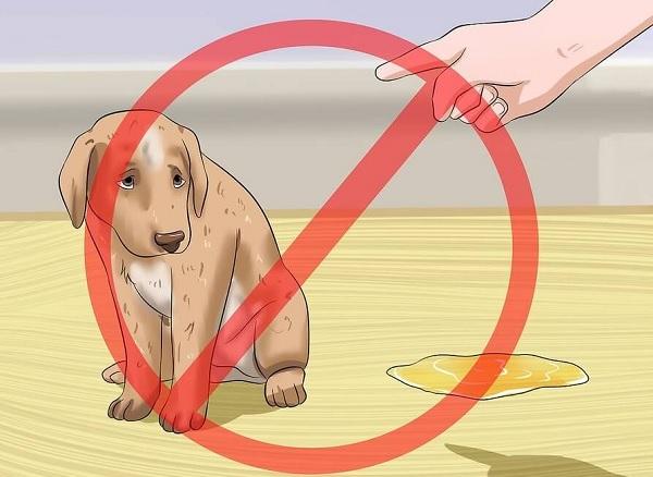Không nên mắng chó nếu chúng đi vệ sinh sai vị trí