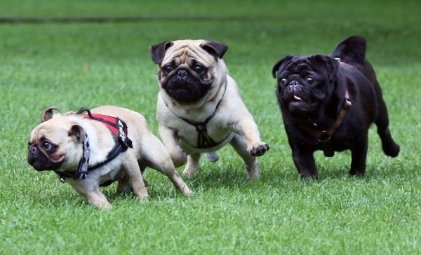 Khuôn viên của trung tâm huấn luyện chó Toàn Phát