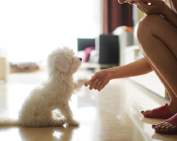 Huấn luyện chó nghe lời